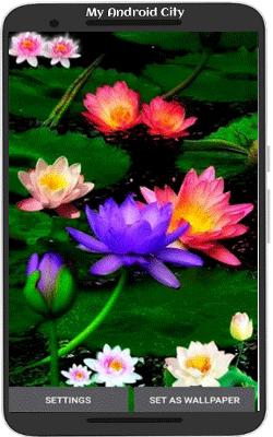 Multicolor-Lotus-LWP